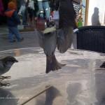 03Venezia-20111219-00791