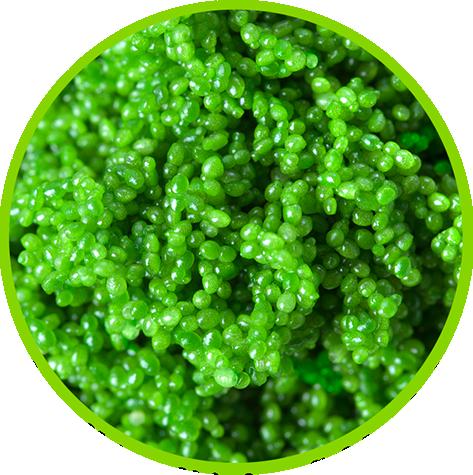 Green-Caviar