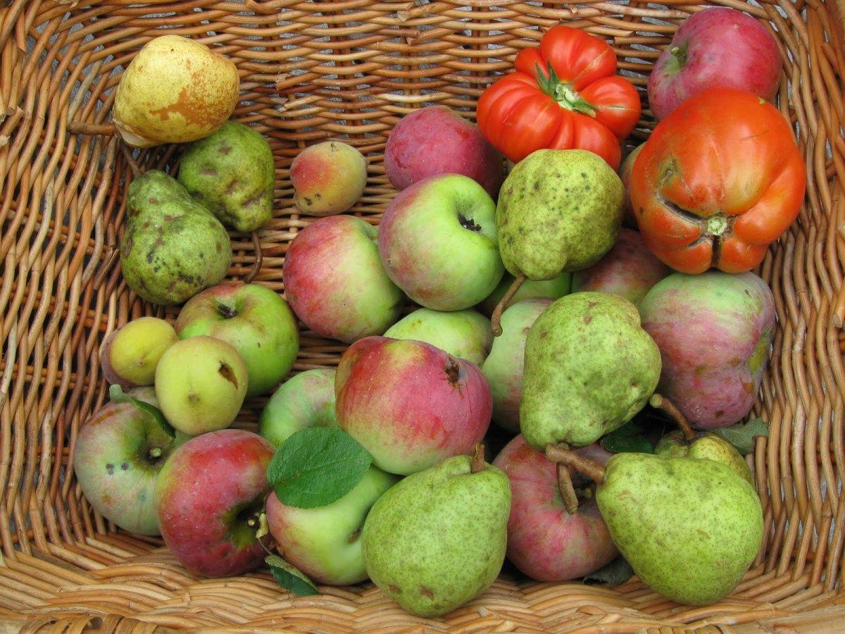 frutta-brutta