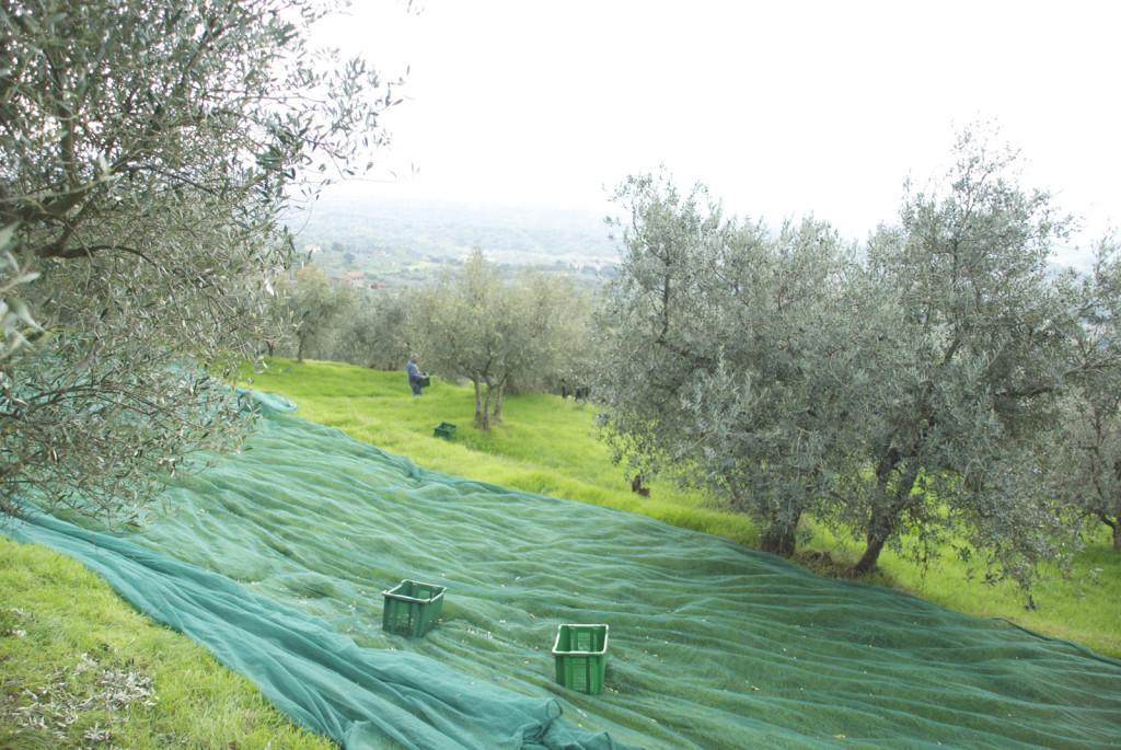 olivi-16_fonte_seminario_veronelli