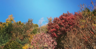 mergozzo_foliage