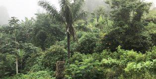 ricetta saotomense: tropici