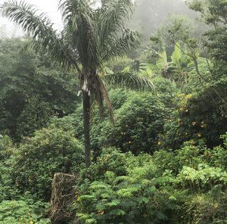Evocare i Tropici. Con una ricetta saotomense