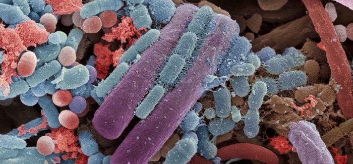 Microbiota. 6 memos per il prossimo decennio (il n°3, inaspettato)