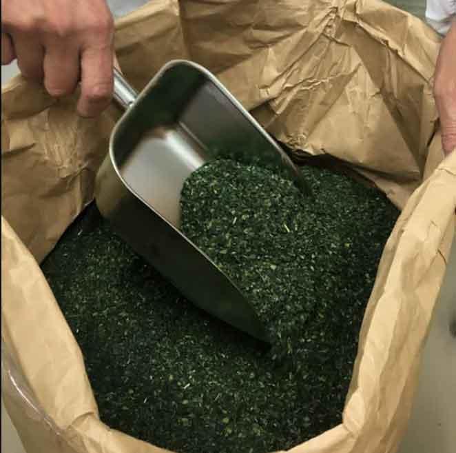 gourmet giappone te verde